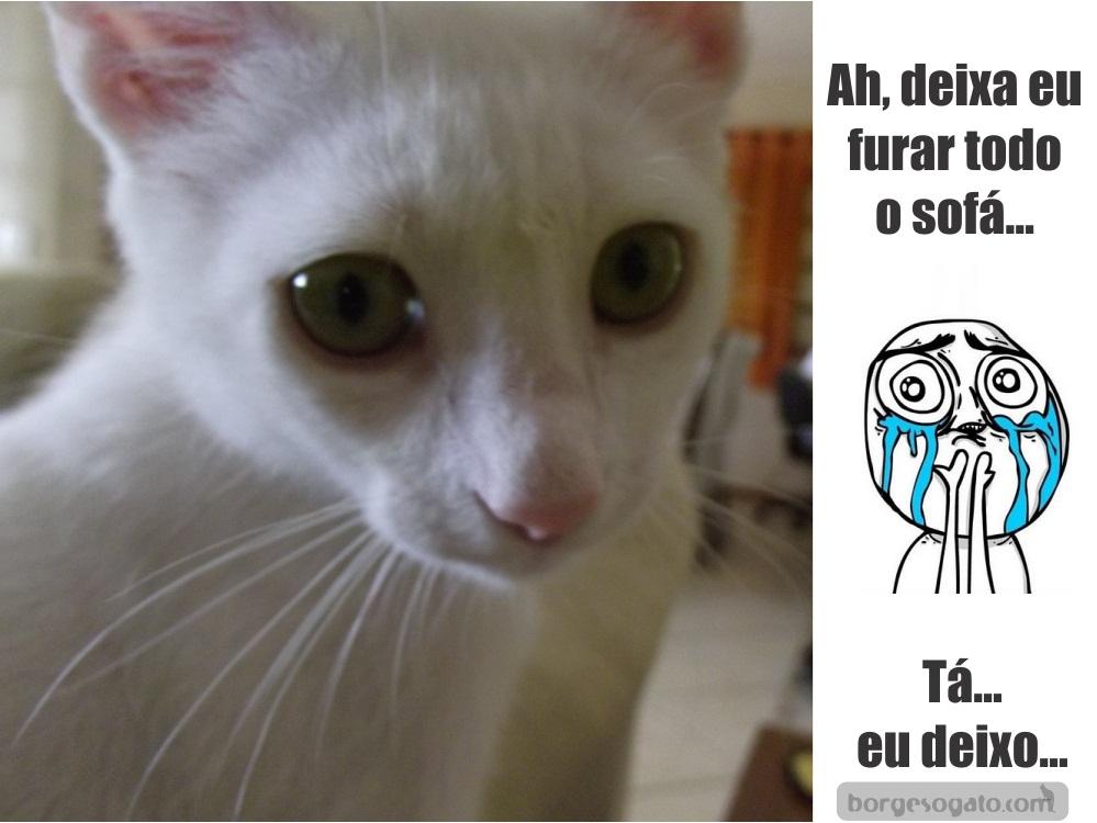 Meme Chorando 171 Borges O Gato