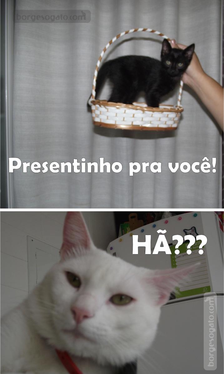 Presentinho De Sexta Borges O Gato
