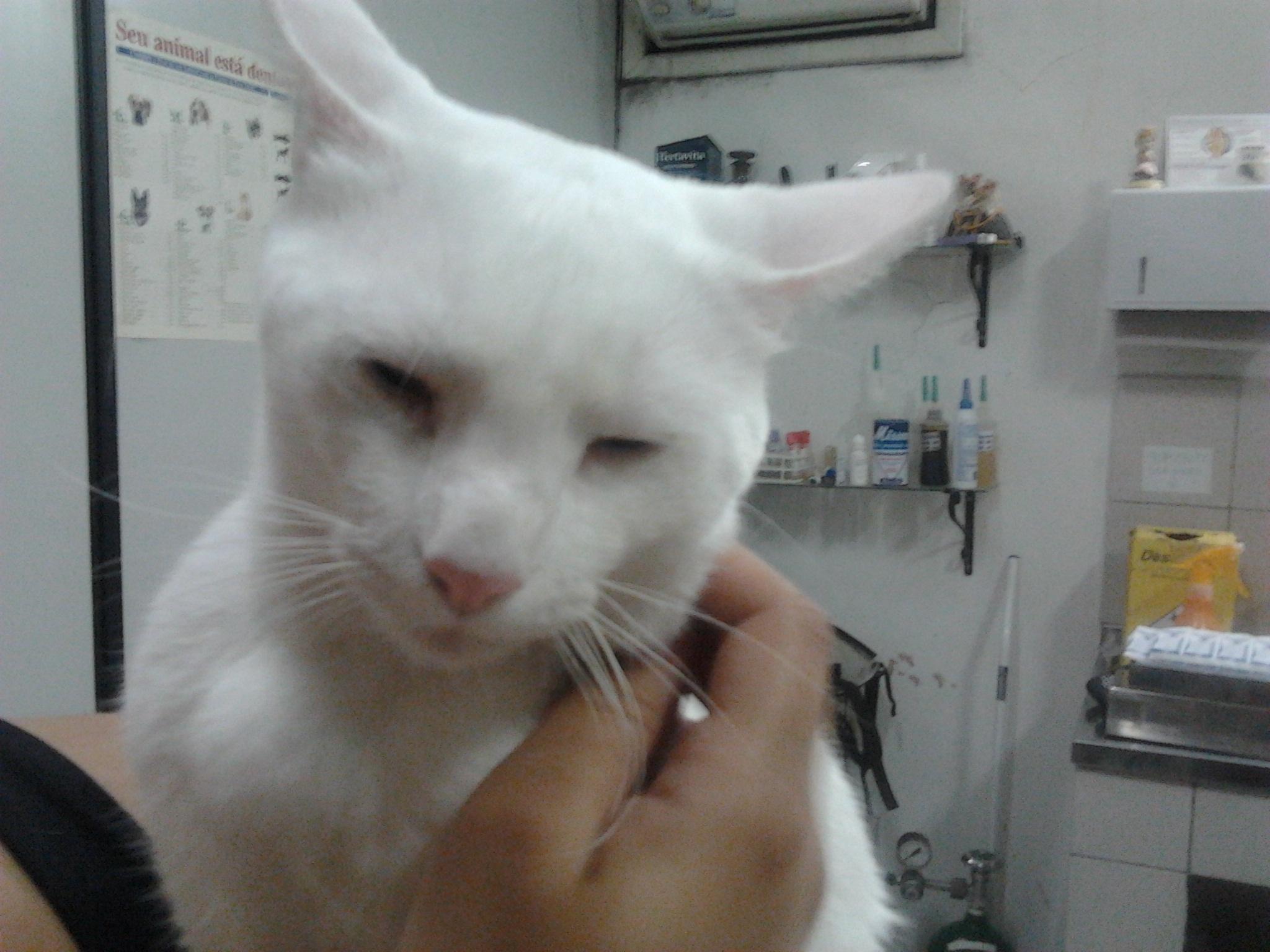 Gato Anestesiado
