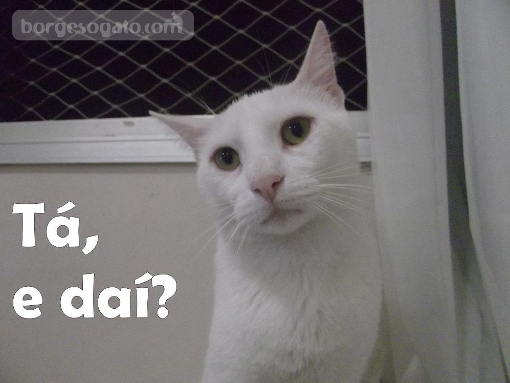 Parabéns Pra Mim Borges O Gato