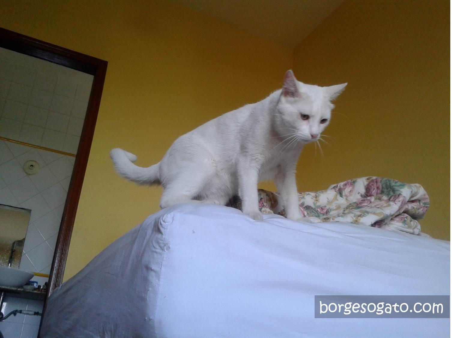 O fantasma em cima da cama me perseguindo