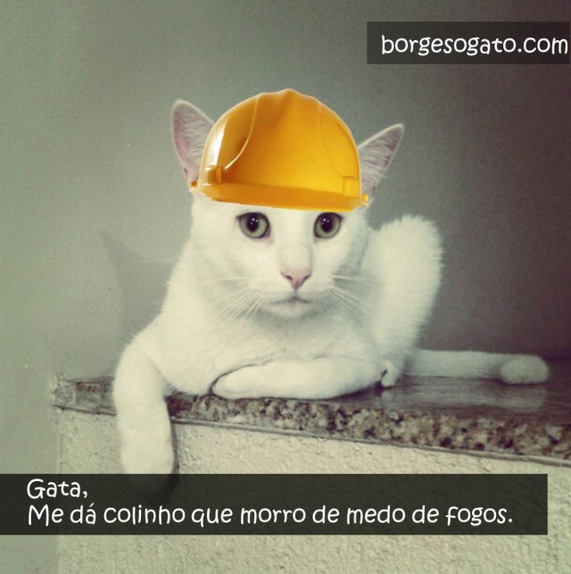 pedreiro gato