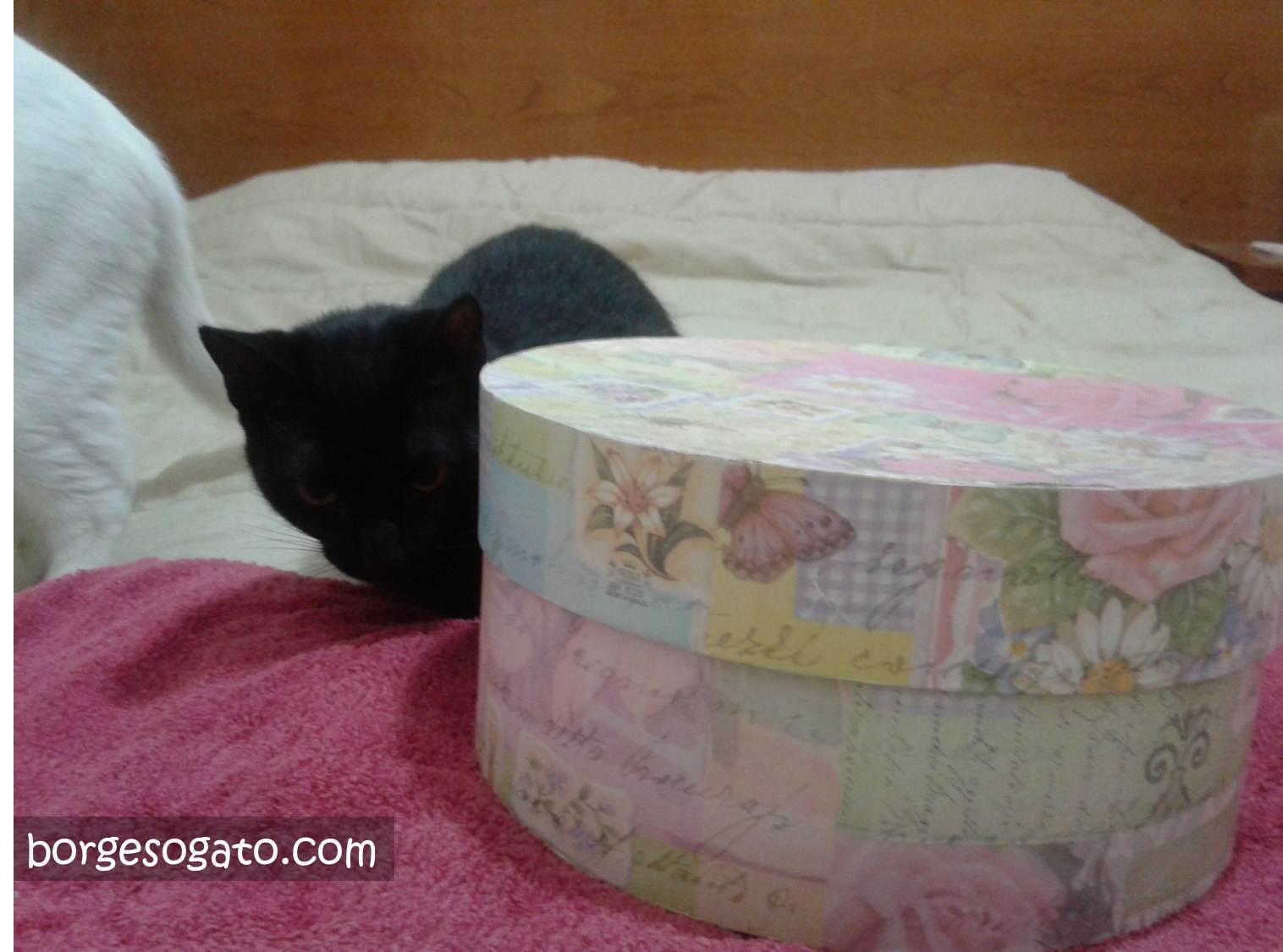Christinha do lado da caixa dada pelo Gato Noel