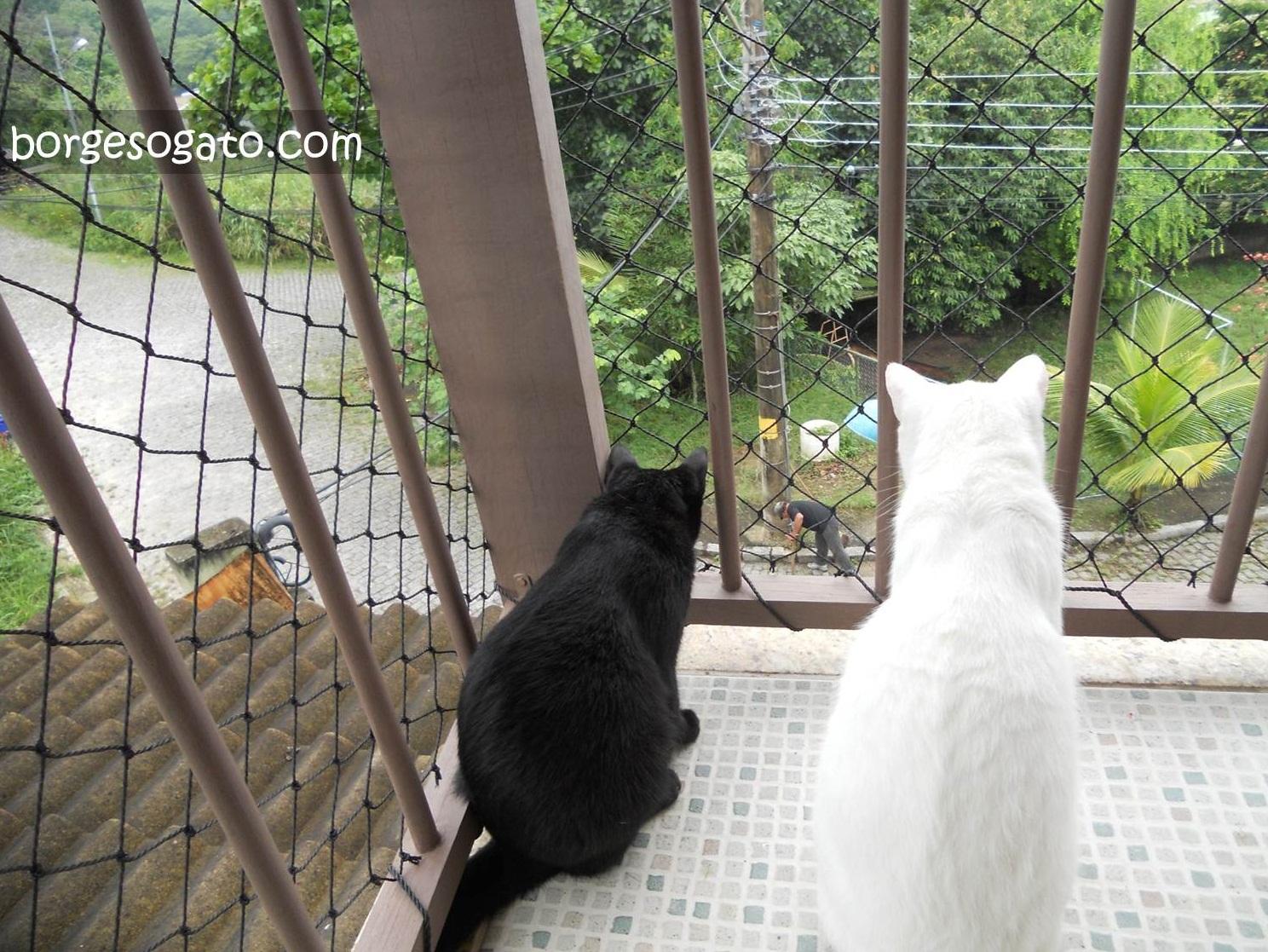 gatos na varanda