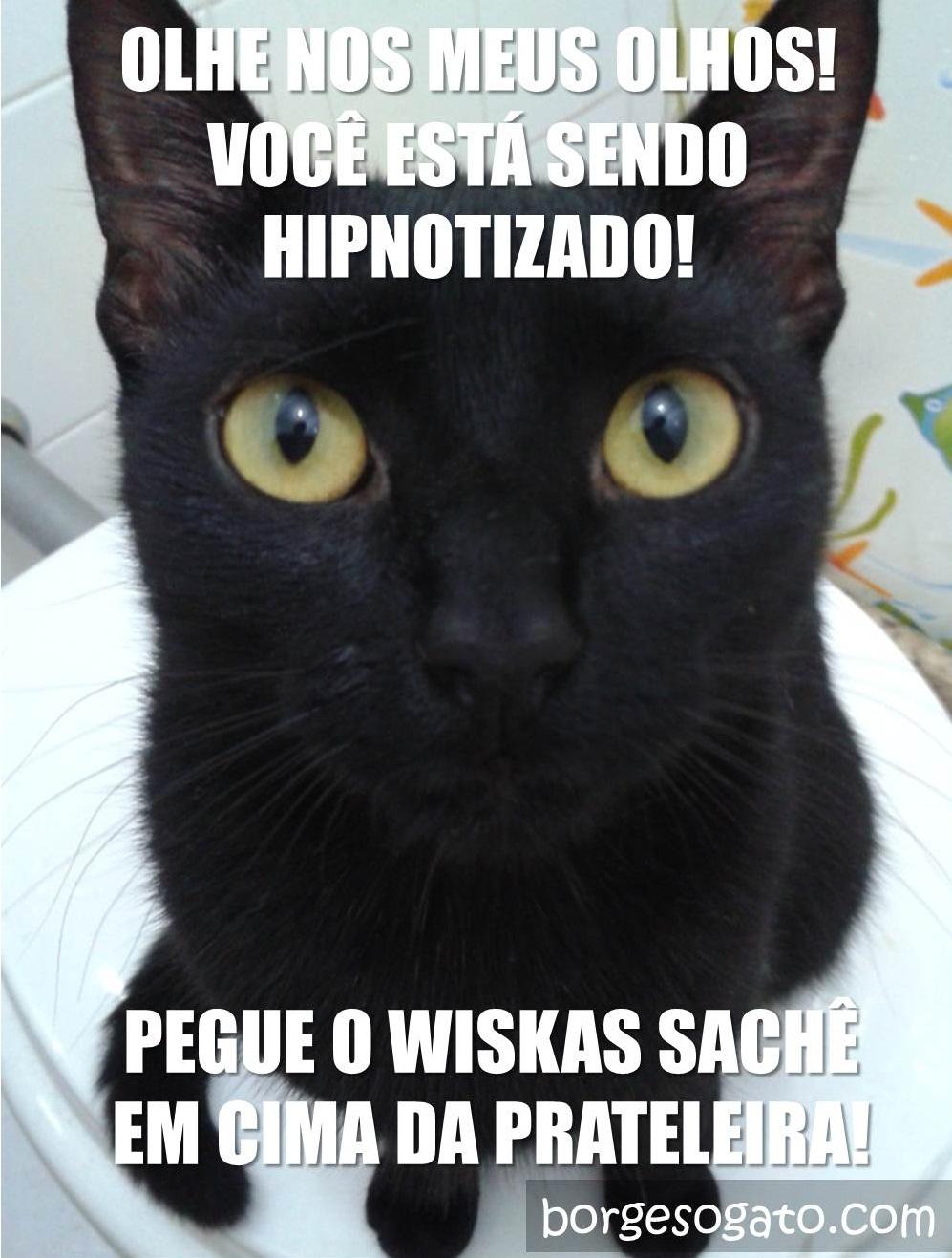hipnose felina