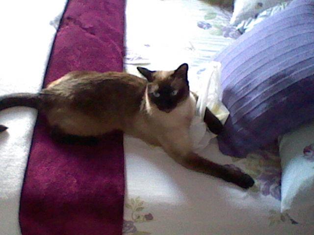 Esta é a Malu, minha paciente de hoje